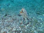 Niedere Tiere von Teneriffa