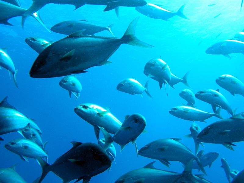 Sitio Montaña de los peces